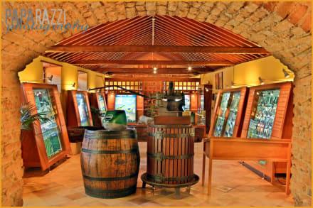 Museo de los Vinos - Casa del Vino La Baranda
