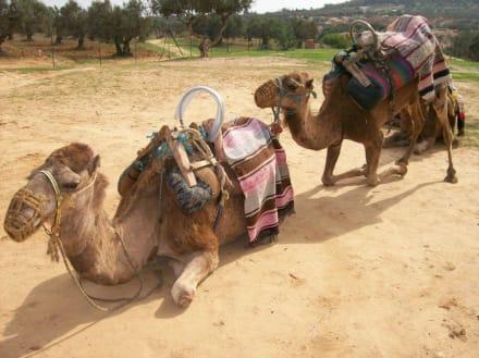 Unser Ausritt - Kamelreiten Port El-Kantaoui