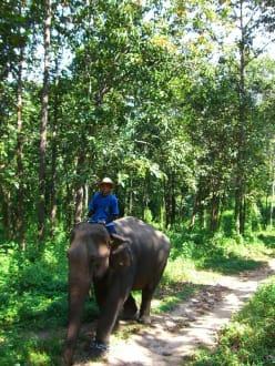 Naturreservat/Zoo - Maetang Elephant Park