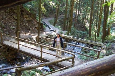 Lockere Waalweg-Wanderung - Oberer Waalweg