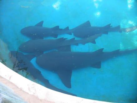 Haie - Meeresschildkrötenstation Projeto Tamar