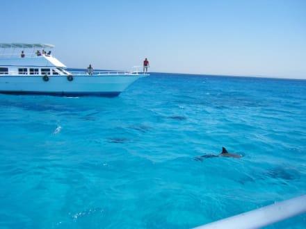 Define im offenen Meer - Delfinschwimmen Delfine & Meer