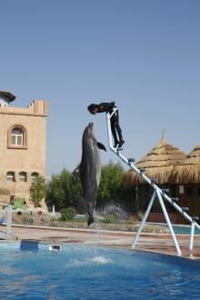 Show - Delfinarium Dolphinella Sharm el Sheikh
