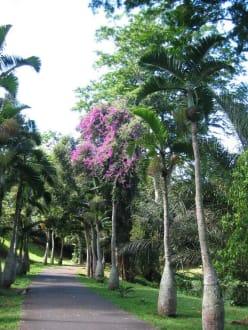 Pampelmuse Garden - Sir Seewoosagur Ramgoolam Botanical Garden / Pamplemousses Botanical Garden