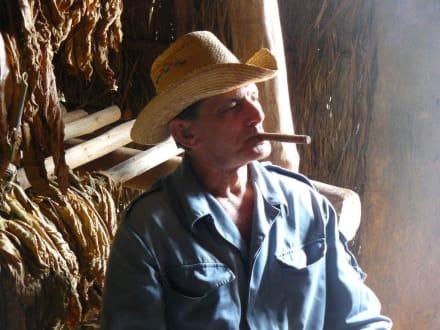 Tabak Pflanzer - Vinales Tal