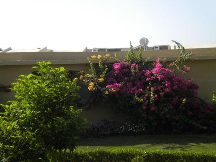 Schöne Blumen in der ganzen Anlage - Three Corners Fayrouz Plaza Beach Resort