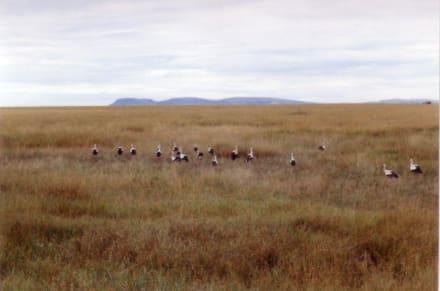 da sind unsere Störche - Masai Mara Safari