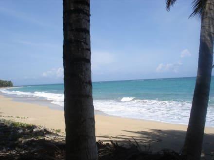 Robinsonfeeling - Playa Esmeralda - Punta del Rey