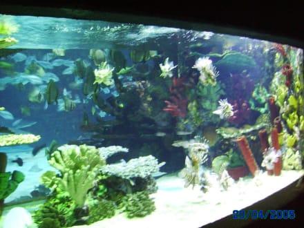 1 der vielen Becken - Tropicarium