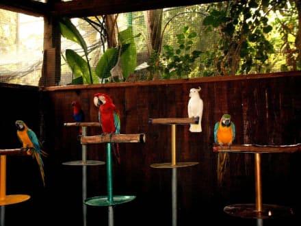 Schlaue Papageien - Oasis Park