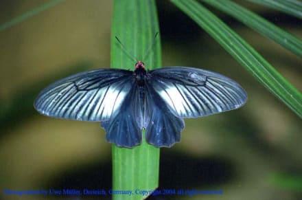 Butterfly Park - Schmetterlingspark - Butterfly Park - Schmetterlingspark