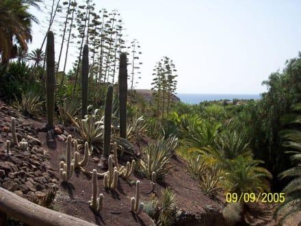 Botanischer Garten in la Lajita - Oasis Park