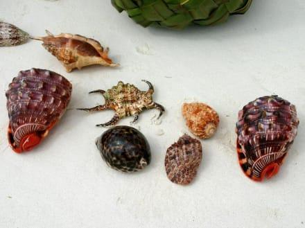 Tolle Muscheln vom Strandfischer - Geführte Touren Diani Beach