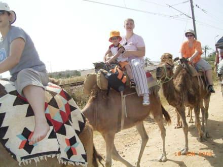 Kameltour - Kamelreiten Mahdia