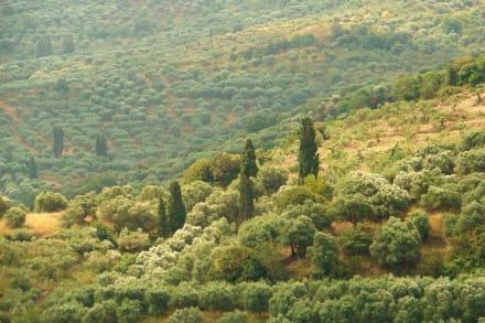 Grün  und Ruhe soweit das Auge reicht - Hochebene von Lasithi