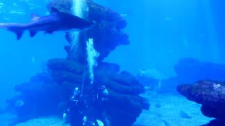 Tauchen mit Haien im Palma Aquarium - Palma Aquarium
