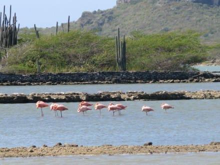 Flamingo Area - Curacao Sea-Aquarium