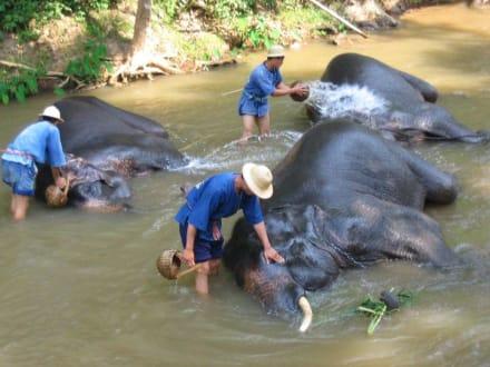 Elefantencamp - Maesa Elephant Camp