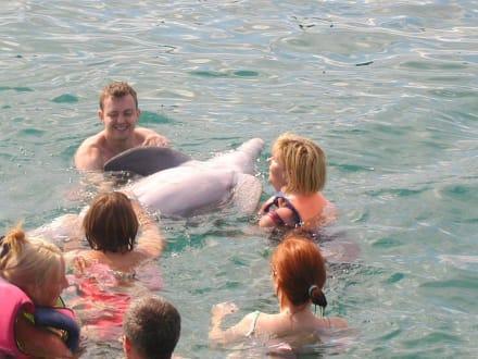 Delphine - Delphinarium Playa Esmeralda