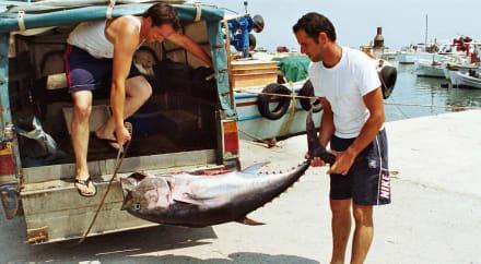 Ein fetter Fang... - Fischerdorf Alykes