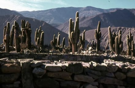 Die Inka-Festung (Pucara) bei Tilcara - Inka-Festung (Pucara) bei Tilcara