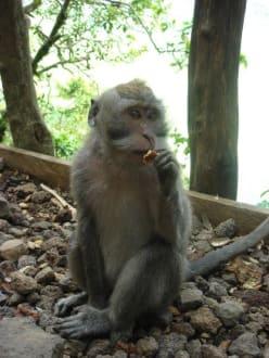 Mit Tika zum Affenwald - Reiseführer Tika