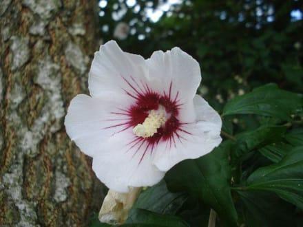 Blume im Tierpark - Tierwelt Herberstein