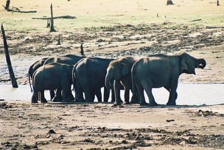 Elefantengruppe am Wasserloch - Nationalpark Udawalawe