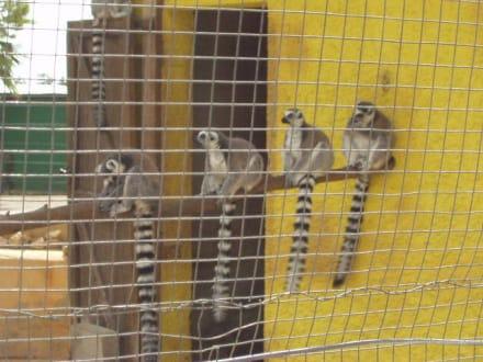 "Süße ""Faulenzer"" im Safari-Zoo - Safari Zoo"