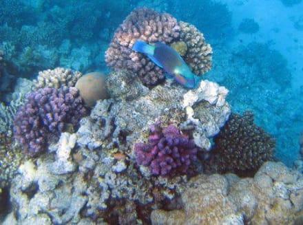 Am Hotelriff Hotel Arabia Azur Beach Resort - Tauchen Hurghada