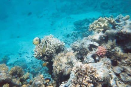 Ägypten Hurghada - Schnorcheln Hurghada
