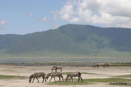 Ngorongoro - Ngorongoro Reservat