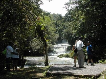 Y.S Falls - YS Falls / Y.S. Wasserfälle