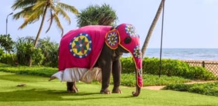 "Hotel Garden with Elephant ""Monika"" -"
