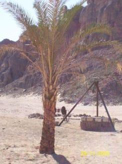 Wasserbrunnen in der Wüste - Jeep Safari Hurghada