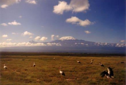 Kilimanjaro, mal ohne Wolken - Nationalpark Kilimandscharo / Kilimanjaro