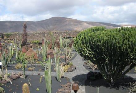 Eine wirklich schöne Anlage - Jardin de Cactus / Kaktusgarten Guatiza
