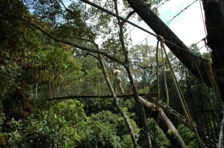 Canopy-Walkway - Canopy-Walkway