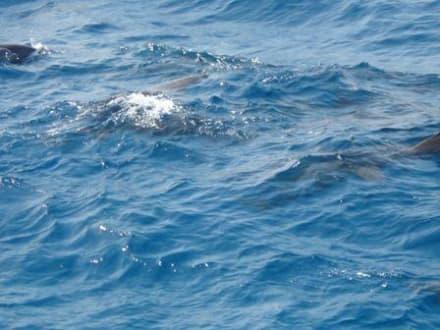 Delphine in Spiellaune - SimSim-Reisen