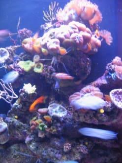 Unterwasserwelt - Palma Aquarium