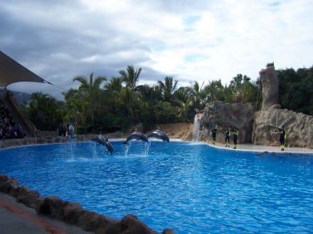 Delphine - Loro Parque