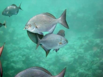 Malediven Unterwasser - Unterwasser