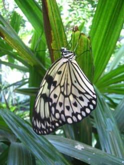 Schöner Schmetterling - Wilhelma