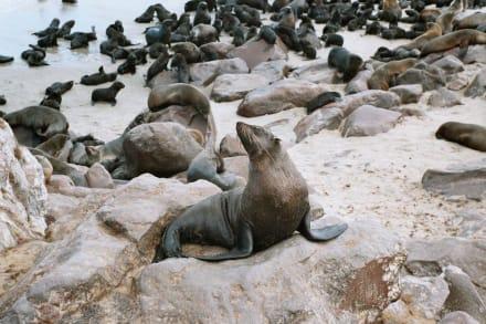 Robbenkolonie - Kreuzkap Cape Cross