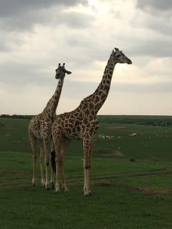 Sport & Freizeit - Masai Mara Safari