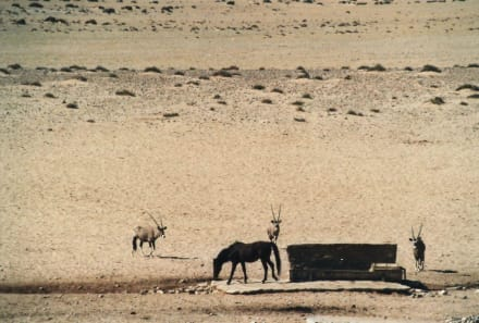 Respektvoller Abstand - Wüste Namib