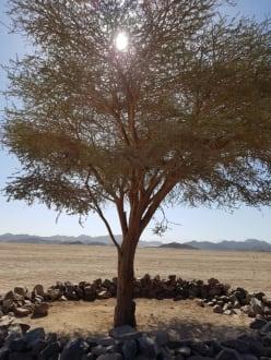 Ein Baum mitten in der Wüste - SimSim-Reisen