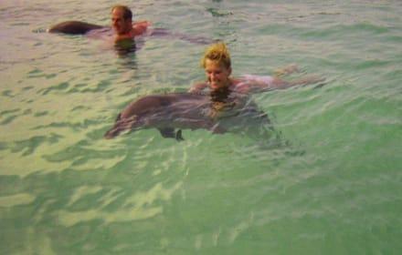 Schwimmen mit Delfinen! Nicht Manati-Park! - Playa Bávaro