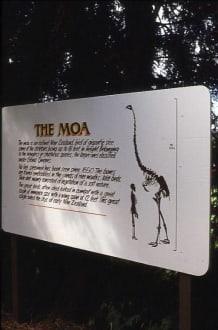 Informationen über die Riesen-Moa - Agrodome