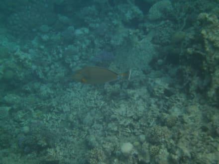 Schnorchelbilder - Tauchbasis Dive Connection El Gouna